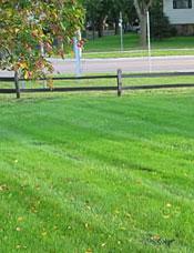 Home Lawn