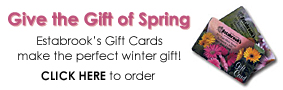 Estabrook's Gift Cards