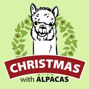 Christmas with Alpacas