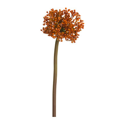 Allium Spray - Orange Brown