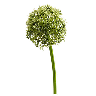 Allium Spray Green