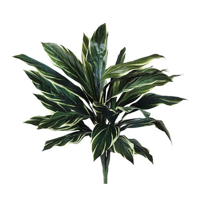 Bush - Aspidistra Green/White