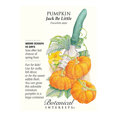 Seeds - BI Pumpkin Jack Be Little