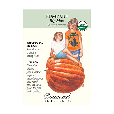 Seeds - BI Pumpkin Big Max Org