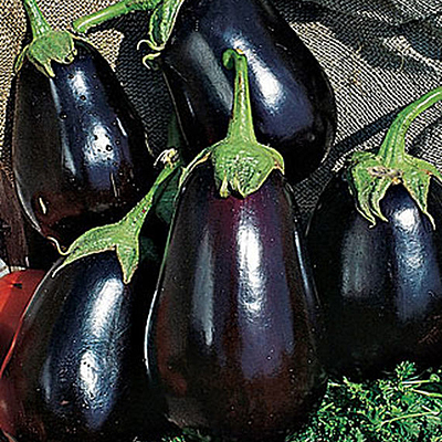 Seeds - OR Eggplant 'Black Beauty'