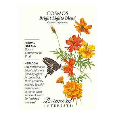 Seeds - BI Cosmos Bright Lights Blend
