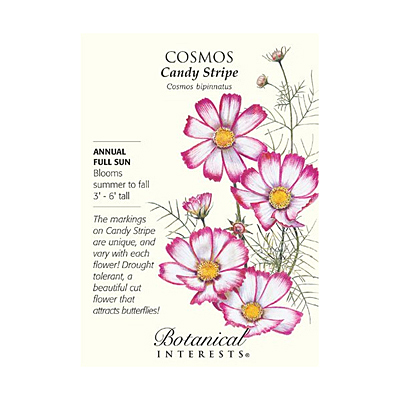 Seeds - BI Cosmos Candy Stripe