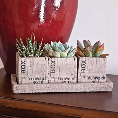 Cement Crate 3-Piece Planter with Tray