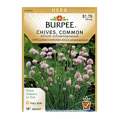 Seeds - Chives 'Common'