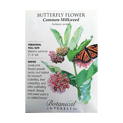 Seeds - BI Butterfly Flower 'Common Milkweed'