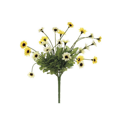 Daisy Bush - Yellow Two Tone