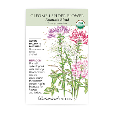 Seeds - BI Cleome Fountain Blend Org