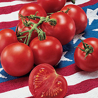 Seeds - Tomato 'Fourth of July Hybrid'