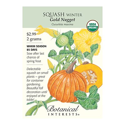 Seeds - BI Squash Winter Gold Nugget Org