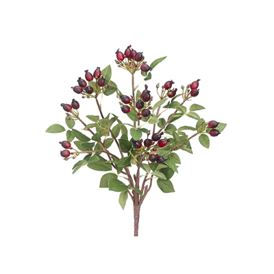 Rose Hip Bush - Burgundy