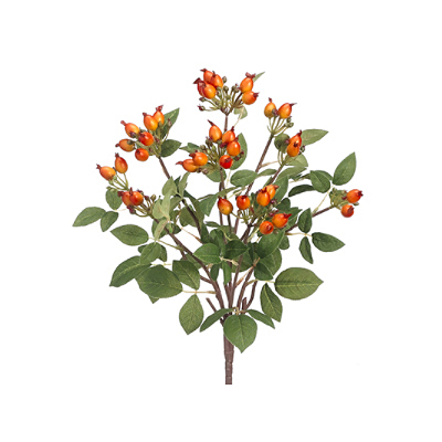 Rose Hip Bush - Orange