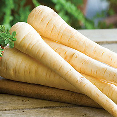 Seeds - H Parsnip 'Hollow Crown'