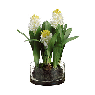 Hyacinth in Glass Vase - White
