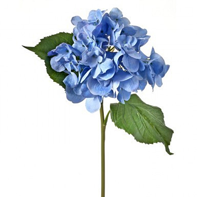 Hydrangea Just Cut Grand - Blue