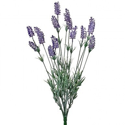 Lavender - French Bush x14 - Purple