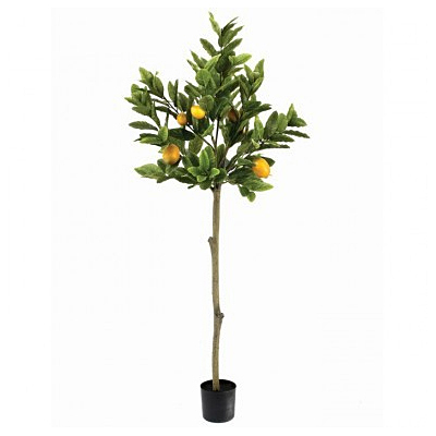 Lemon tree Potted Topiary & Lemons