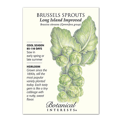 Seeds - BI Brussels Sprouts Long Island Imp