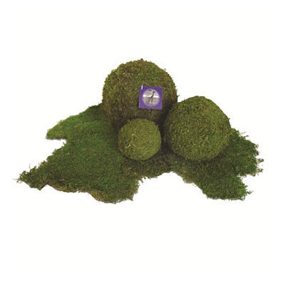 Moss Ball Preserved