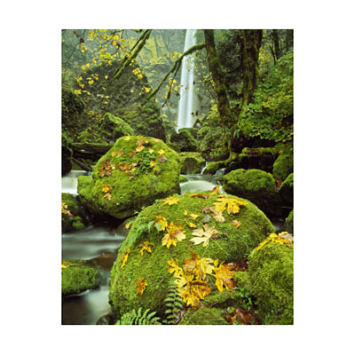 Outdoor Art - Moss & Falls