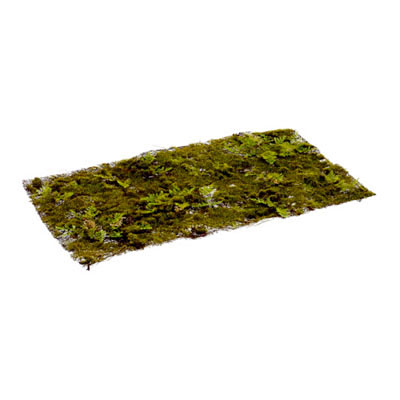 Moss Fern Sheet - Green