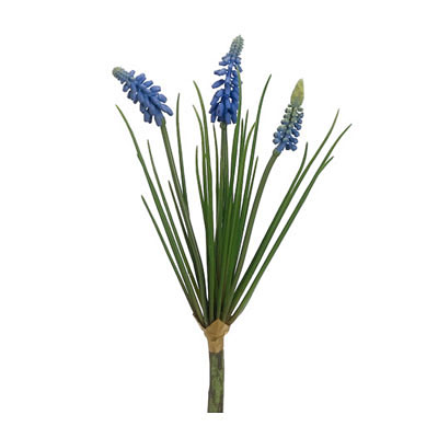 Muscari Bush - Helio Blue
