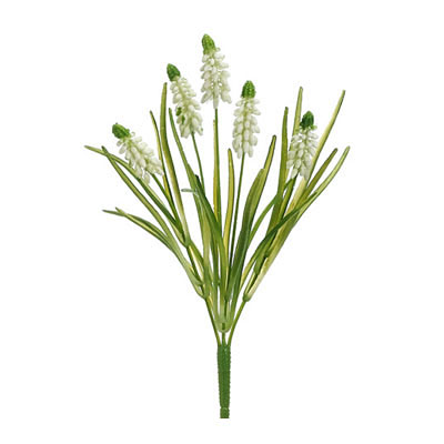 Muscari Pick - White