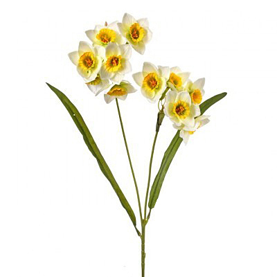 Narcissus Double Spray - White/Yellow