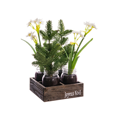 Narcissus Pine in Vase Tray
