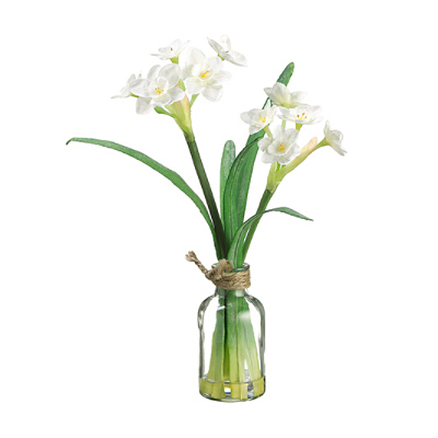 Narcissus in Glass Vase - White
