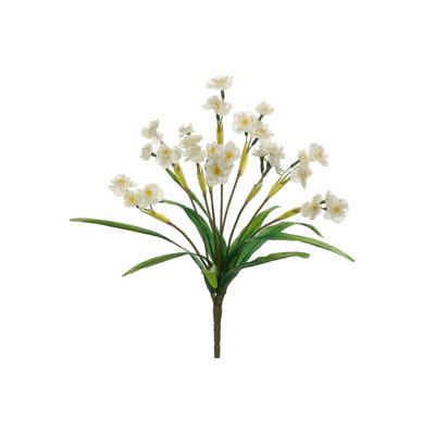 Narcissus Bush White
