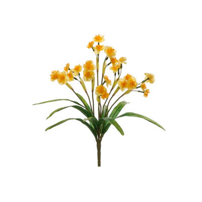 Narcissus Bush Yellow