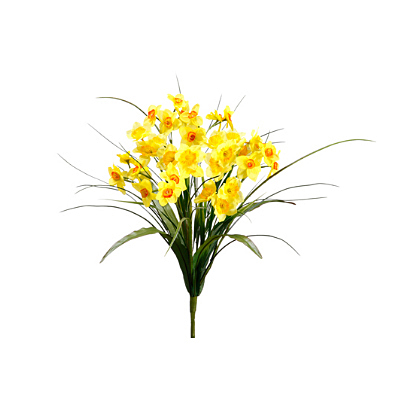 Narcissus Bush - Yellow