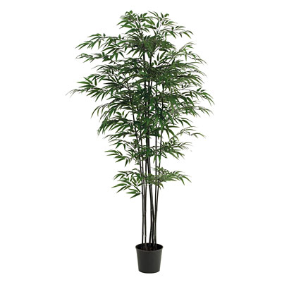 Bamboo - Black Potted
