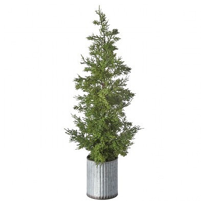 Cedar Plant - Galvanize Potted Natural Green