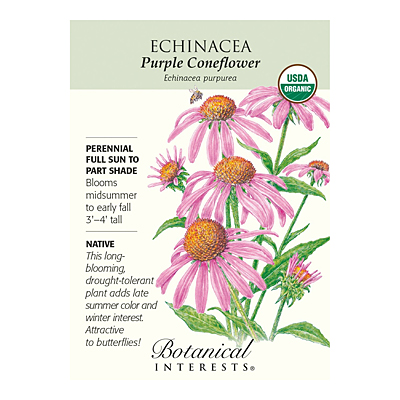Seeds - BI Echinacea Purple Coneflower Org