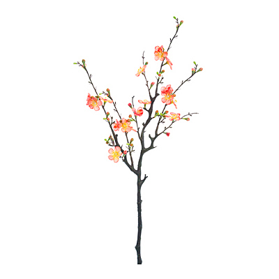 Quince Blossom Branch - Peach