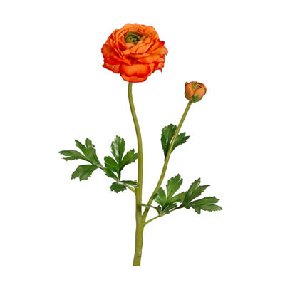 Ranunculus Spray with Bud Orange
