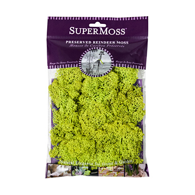 Moss - Reindeer Preserved Bag