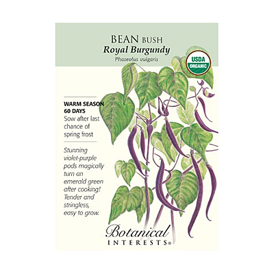 Seeds - BI Bean Bush Royal Burgundy Org