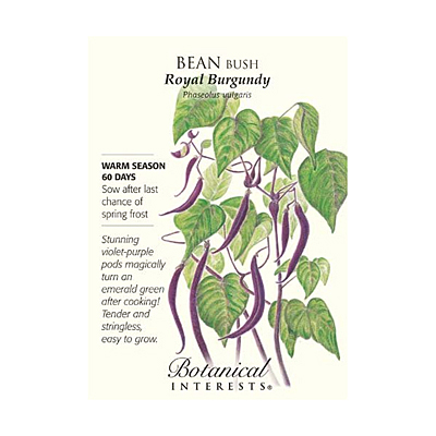 Seeds - BI Bean Bush Royal Burgundy