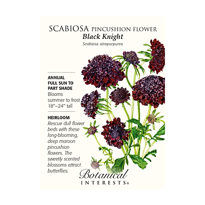 Seeds - BI Scabiosa Black Knight