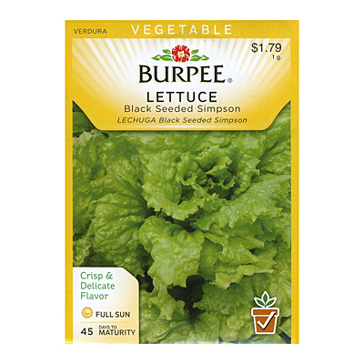 Seeds - Lettuce, Leaf 'Black-Seeded Simpson'