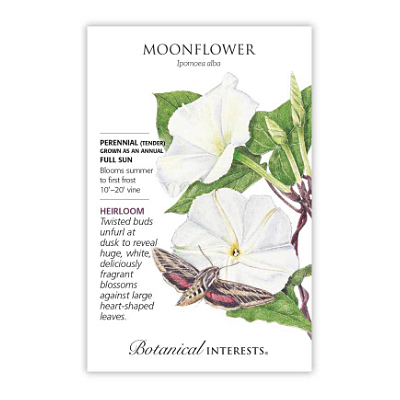 Seeds - BI Moonflower
