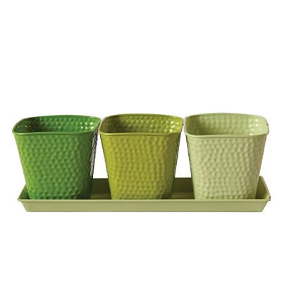 Herb Garden Set - Selby Limelight