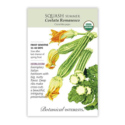 Seeds - BI Squash Summer Costata Org